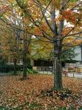 Feuilles en baisse et couleurs d'automne Photo stock