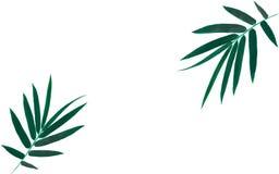 Feuilles en bambou d'isolement sur le fond blanc, feuille en bambou illustration libre de droits