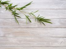 Feuilles en bambou sur en bois blanc image stock