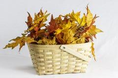 Feuilles en bois d'automne de panier Photo libre de droits