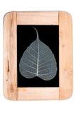 Feuilles en bois de cadre et de pho Photographie stock libre de droits