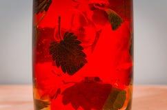 Feuilles en bon état en gelée rouge Photo libre de droits
