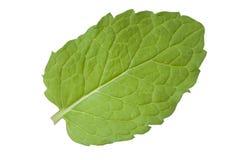 feuilles en bon état fraîches Photographie stock