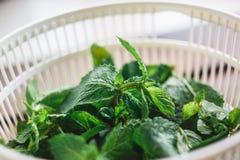Feuilles en bon état fraîches dans le dessiccateur pour des verts photos stock