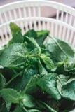Feuilles en bon état fraîches dans le dessiccateur pour des verts photographie stock