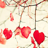 Feuilles en forme de coeur rouges Photo libre de droits