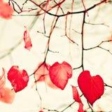 Feuilles en forme de coeur rouges Photo libre de droits