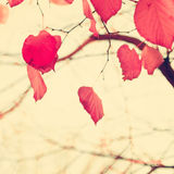 Feuilles en forme de coeur rouges Photo stock