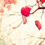 Feuilles en forme de coeur rouges Photographie stock libre de droits