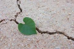 Feuilles en forme de coeur sur la terre criquée/amour le monde Image libre de droits