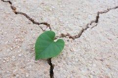 Feuilles en forme de coeur sur la terre sèche Images libres de droits