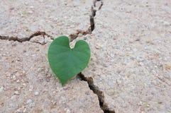 Feuilles en forme de coeur sur la terre sèche Image libre de droits