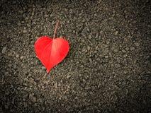 Feuilles en forme de coeur sur le plancher Photographie stock