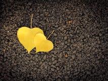 Feuilles en forme de coeur sur le plancher Images stock