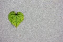 Feuilles en forme de coeur sur le sable Photographie stock