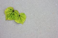 Feuilles en forme de coeur sur le sable Images stock