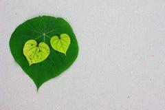Feuilles en forme de coeur sur le sable Photo stock