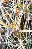 Feuilles en gelée Photographie stock libre de droits