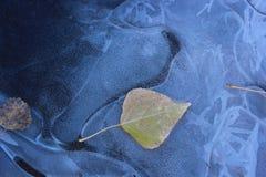 Feuilles en glace Photo libre de droits