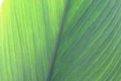 Feuilles en gros plan de vert Photo stock