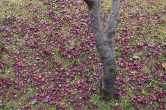 Feuilles et arbre secs d'automne photo stock
