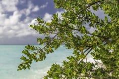 Feuilles et arbre sur la plage en Maldives Images stock