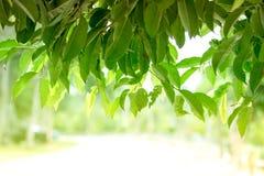 Feuilles et branche de vert Photo stock
