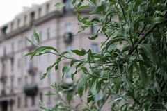 Feuilles et branches d'un arbre sur le fond du paysage européen urbain images libres de droits