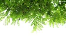 Feuilles et branches de vert photographie stock libre de droits
