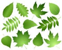 Feuilles et branches de vert réglées Photographie stock libre de droits