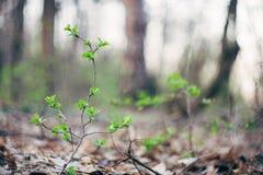 Feuilles et brindilles de végétation de vert de plancher de forêt photo stock
