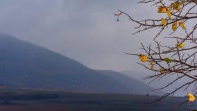 Feuilles et brouillard d'automne images libres de droits