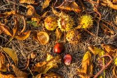 feuilles et châtaignes d'automne au sol Photo libre de droits