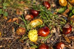 feuilles et châtaignes d'automne au sol Photographie stock
