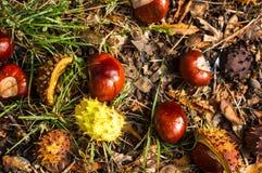 feuilles et châtaignes d'automne au sol Images libres de droits