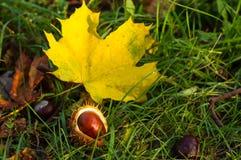 feuilles et châtaignes d'automne dans l'herbe verte Image stock