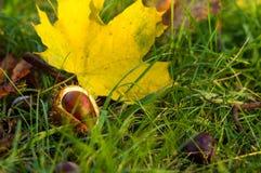 feuilles et châtaignes d'automne dans l'herbe verte Image libre de droits