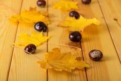 Feuilles et châtaignes d'automne sèches Image stock
