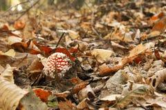 Feuilles et champignon Image stock