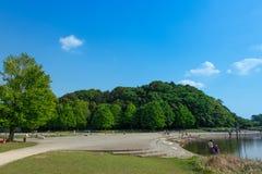 Feuilles et ciel d'été en parc Photos libres de droits
