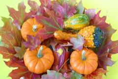 Feuilles et courges d'érable d'automne. images libres de droits