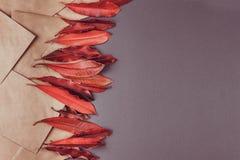 Feuilles et enveloppe rouges sur le fond coloré photos libres de droits