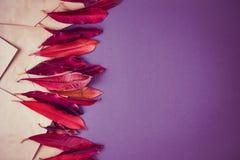 Feuilles et enveloppe rouges sur le fond coloré images stock