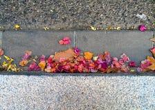 Feuilles et fleurs d'automne sur la route photos stock