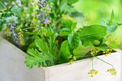 Feuilles et fleurs de fines herbes photographie stock libre de droits