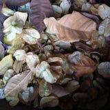 Feuilles et fleurs tombées images stock