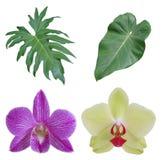 Feuilles et fleurs tropicales isloated mélangées Images libres de droits