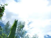 Feuilles et fond de ciel bleu Photographie stock libre de droits