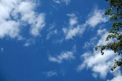 Feuilles et fond de ciel rempli par nuage bleu Photo stock