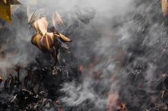 Feuilles et fumée brûlées Photo stock